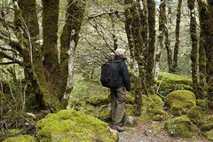 Arthur's Pass, hiking man in rain forest - stock photo