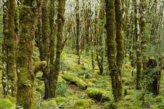 Rain forest on Arthur's Pass Stock Photos