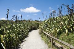 Auckland, path on Muriwai Beach Stock Photos