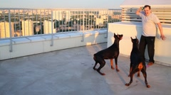 Man teasing two Dobermans by toy on roof of tall building Stock Footage