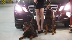 Beautiful blonde woman with two Dobermans next to black car Stock Footage
