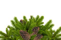 Green branch of Christmas tree with cones isolated on white Stock Photos