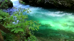 Stream with crystal clear water in the gorge of Vintgar in Slovenia Stock Footage