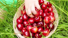 Basket with red wet cherry and kid hand takes berry on grass Stock Footage