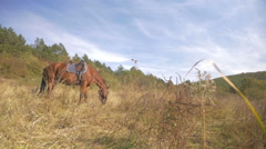 Beautiful red horses taken in  mountains Stock Footage