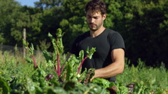 Farmer hand picking his organic crops Stock Footage