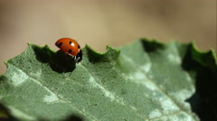 Lady Bird In the wild. Stock Footage