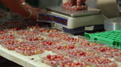 Berries being hand sorted into punnets. - stock footage