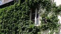 FRANCE, PARIS Ivy-covered house on Montmartre - stock footage