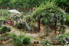 Rose arch in english rose garden Stock Photos