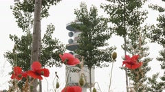 Radio tower seen trough poppies and poplar trees Stock Footage
