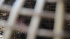 Gamecock sick in cage., video dolly shot. Stock Footage