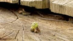 Green Caterpillar Creeps Close Up. - stock footage