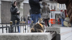 2 beautiful cats relaxing on a bench in the city - stock footage
