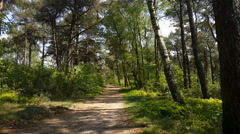 Forest at the National Park in Nijverdal Stock Footage