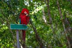 Pointer to tropical adventure - stock photo