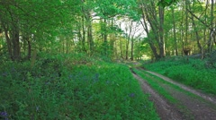 woodland path and gateway spring flowers bluebells (static) - stock footage