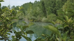 View of a pond in spring full of floating poplars pappuses Stock Footage