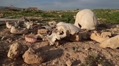 Skull with dentures next to it at an ISIS killing field in Iraq - stock footage