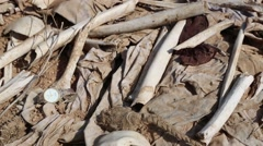 Down tilt of a skull with a broken noose around it's neck at a mass grave in Ira Stock Footage