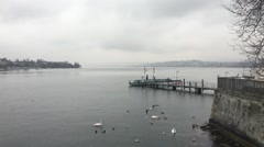 Birds Near Dock on Shore of Lake Zurich, Zurich Switzerland - stock footage