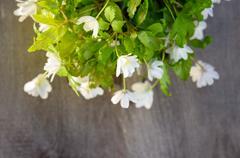 Flowers  snowdrop Anemone Stock Photos