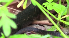 black snake in forest - stock footage