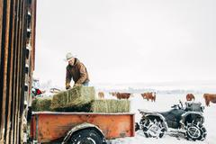 Caucasian farmer hauling hay near snowy barn Stock Photos