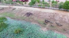 Aerial fly over on lake or pond and crowd of Water buffalo migration Stock Footage