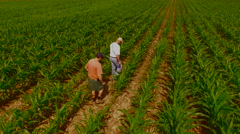 A farmer and an  agricultural consultant inspect a GMO corn plant. Stock Footage