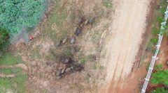 Aerial fly over top view of crowd of Water buffalo migration at river edge Stock Footage