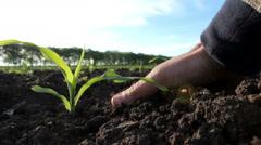 Man's hand checks on Soil fertility Stock Footage