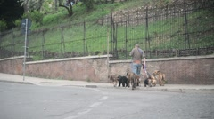 Man walk their dogs for money. Rome, Italy. Stock Footage