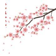 Pink sakura flowers isolated on white. EPS 10 - stock illustration