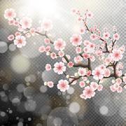 Beautiful template sakura flowers. EPS 10 Stock Illustration