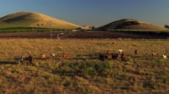 Morning Light Epic Aerial Wide Horses in the mountains Running (2).mp4 Stock Footage