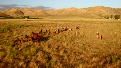 Country Farm Morning Light Epic Aerial Wide Horses in the mountains Running.m Stock Footage