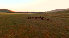 Farm with Group Of Cows Running Mountains Sun Set Wide Epic Aerial View Movin Stock Footage