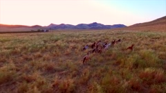Farm With Mountains Wild Horses Sun Set Wide Slow Epic Aerial View.mp4 Stock Footage