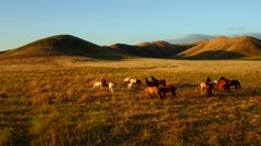 Aerial View Horses On a Country Farm Morning Sun Flare Aerial View Dusk   Stock Footage
