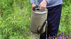 A woman pours water from a watering can Stock Footage