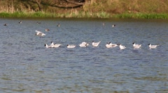 The colony of gulls in the city park Stock Footage