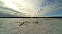 Wide angle 4k timelapse video of dead fish lying on ice, clouds moving over Stock Footage