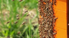 Swarm of busy honey bees entering beehive Stock Footage