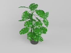 3d isolated house plant inside a white stage Stock Illustration
