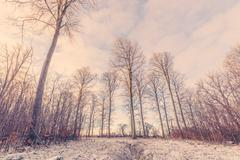 Forest landscape with tall trees at wintertime Stock Photos