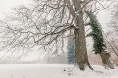 Magical trees in a winter scenery Stock Photos