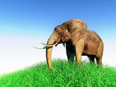 3d elephant in nature Piirros