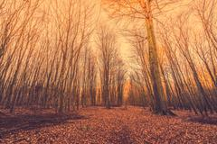Fallen leaves in a forest at sunrise Stock Photos