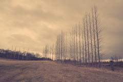 Bare trees on a row Stock Photos
